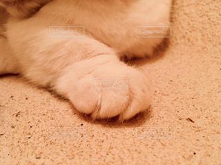 猫,動物,指,ねこ,ペット,人物,肉球,cat,爪,前足,ネコ,前脚