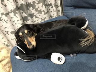 犬の写真・画像素材[2053485]