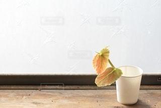 ベゴニアの葉の写真・画像素材[2741689]