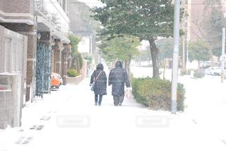 雪の降る道の写真・画像素材[2812299]