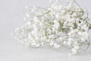 花をクローズアップするの写真・画像素材[2816370]