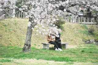 女性,男性,恋人,2人,公園,花,春,桜,カップル,木,屋外,フラワー,花見,草,樹木,お花見,イベント,草木,桜の花,さくら