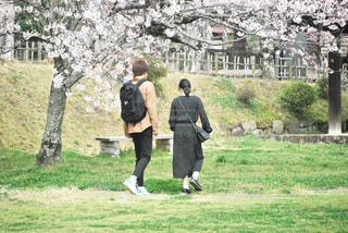 女性,男性,恋人,2人,公園,花,春,桜,カップル,木,屋外,フラワー,花見,草,樹木,お花見,人,イベント