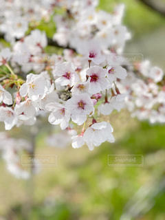 花のクローズアップの写真・画像素材[3069008]