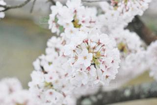 花のクローズアップの写真・画像素材[3074038]