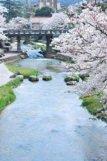 玉造温泉の桜の写真・画像素材[3074049]