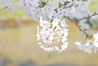 花のクローズアップの写真・画像素材[3074051]