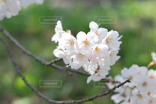 植物の上の白い花の写真・画像素材[3074070]