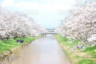 川の側に木がある道の写真・画像素材[3074075]