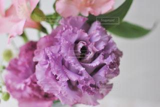 花のクローズアップの写真・画像素材[3096190]