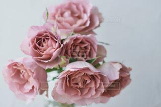花のクローズアップの写真・画像素材[3110100]