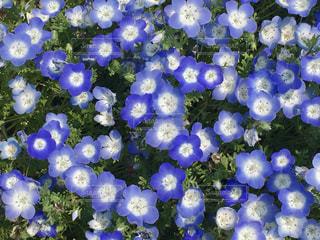 空色の花畑の写真・画像素材[2043291]