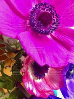 カラフル、Flower!の写真・画像素材[2043838]