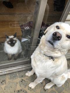 仲良し,窓越しのご挨拶