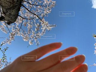 春の空の写真・画像素材[3083291]