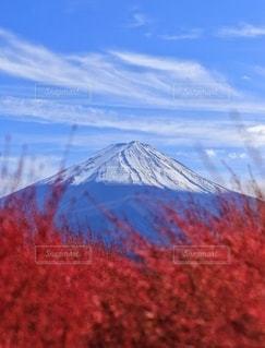 紅葉と初冠雪の写真・画像素材[2652765]