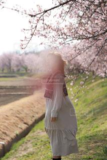 桜並木と女の子の写真・画像素材[4275419]