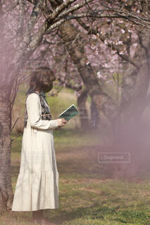 桜の下で読書の写真・画像素材[4279047]