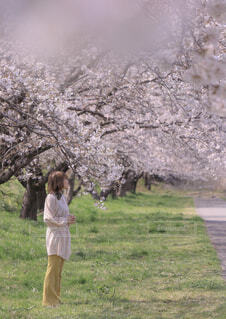 桜を愛でるの写真・画像素材[4281473]