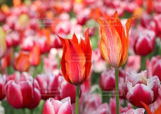 花のクローズアップの写真・画像素材[4333877]
