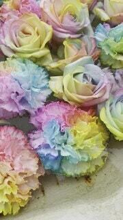 風景,花,花束,バラ,レインボー,花びら,薔薇,たくさん,虹色,草木,花手水,フロリバンダ,ハイブリッドティーローズ
