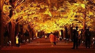 風景,屋外,樹木,人物,ライトアップ,人,明るい,通り,銀杏並木
