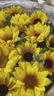 風景,花,ひまわり,黄色,たくさん,なつ,草木,配置,花手水