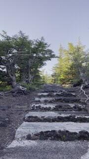 自然,風景,富士山,屋外,夕焼け,樹木,大地,岩,新緑,高原,なつ,草木,赤富士,山腹
