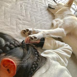 犬,昼寝,子供,寝る,犬と子供