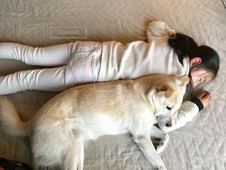 犬,昼寝,子供,寝る,保護犬,雑種,犬と子供