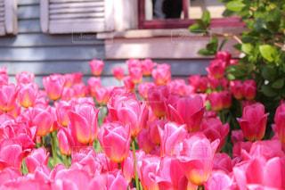 花のクローズアップの写真・画像素材[2121927]