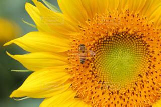 花のクローズアップの写真・画像素材[4295567]
