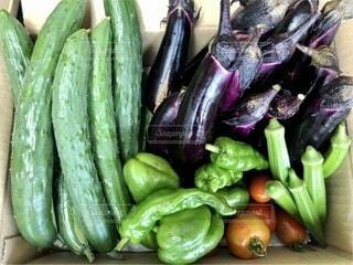 自宅で採れた野菜の写真・画像素材[4655383]