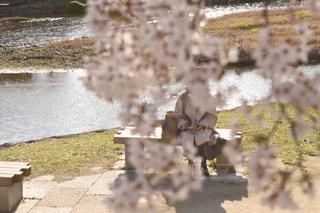 花,春,桜,木,屋外,ベンチ,川,草,お花見,イベント,友達,草木