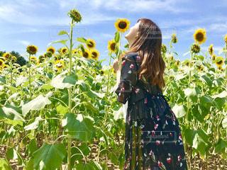 女性,風景,空,花,夏,ロングヘア,カメラ女子,屋外,後ろ姿,景色,向日葵,人物,人,デザイン,インスタグラム,半袖,インスタ映え