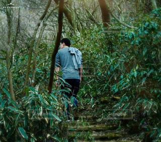 男性,自然,風景,森林,後ろ姿,樹木,人物,人,筑波山,草木,後ろ姿フォト