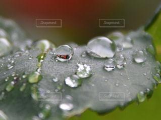 自然,風景,屋外,水滴,景色,雫,しずく,日中