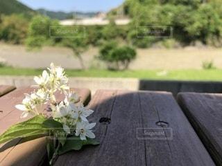 夏花の写真・画像素材[2040563]