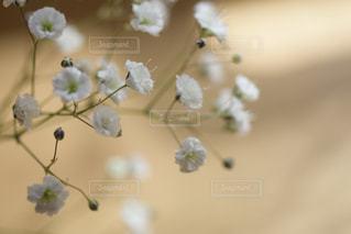 花の写真・画像素材[2044007]