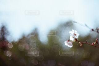 自然の写真・画像素材[2044008]