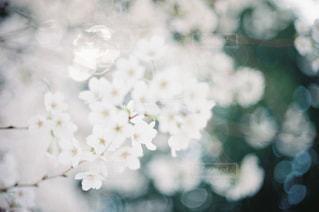 花の写真・画像素材[2044021]