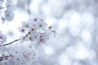 花の写真・画像素材[2045922]
