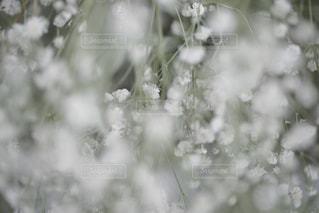 花のクローズアップの写真・画像素材[2459240]
