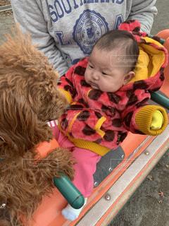 犬,かわいい,人物,赤ちゃん