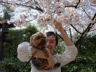 犬,花,桜,屋外,お花見,人物,人,お散歩,ヨークシャーテリア,ヨーキー,わんちゃん