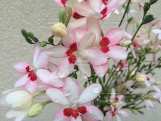 花,庭,花束,水,水玉,花壇,雫,薄紅色,ヒメオウギ