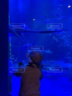 水族館の写真・画像素材[2097918]
