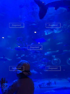 魚,後ろ姿,水族館,子供,女の子,人物,人