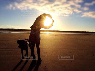 犬と太陽の写真・画像素材[2049982]