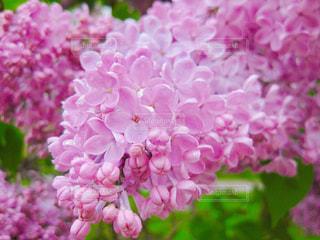花のクローズアップの写真・画像素材[2107719]